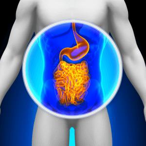 Gut-microbiota.png